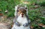 http://www.nickomargolies.com/big/2008/10/squirrel-week-post-4/